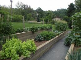 Raised bed filled with vegetables.