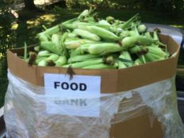 Corn donated to the Ross County Food Banks